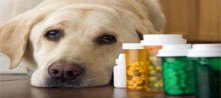 Seminar on Veterinary Product Registration